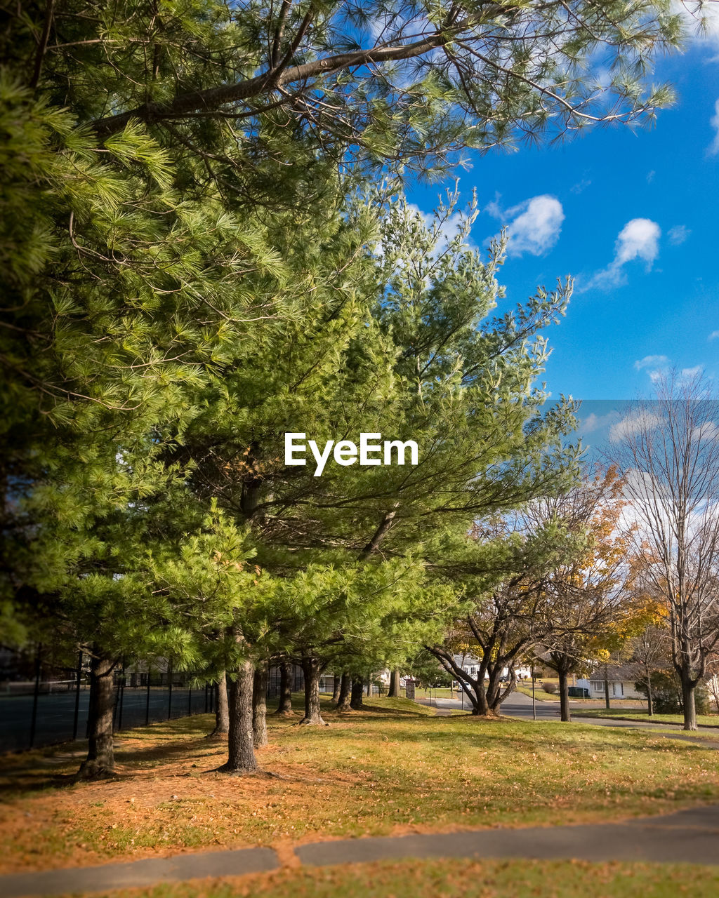 tree, nature, autumn, sky, landscape, no people, outdoors, beauty in nature, day