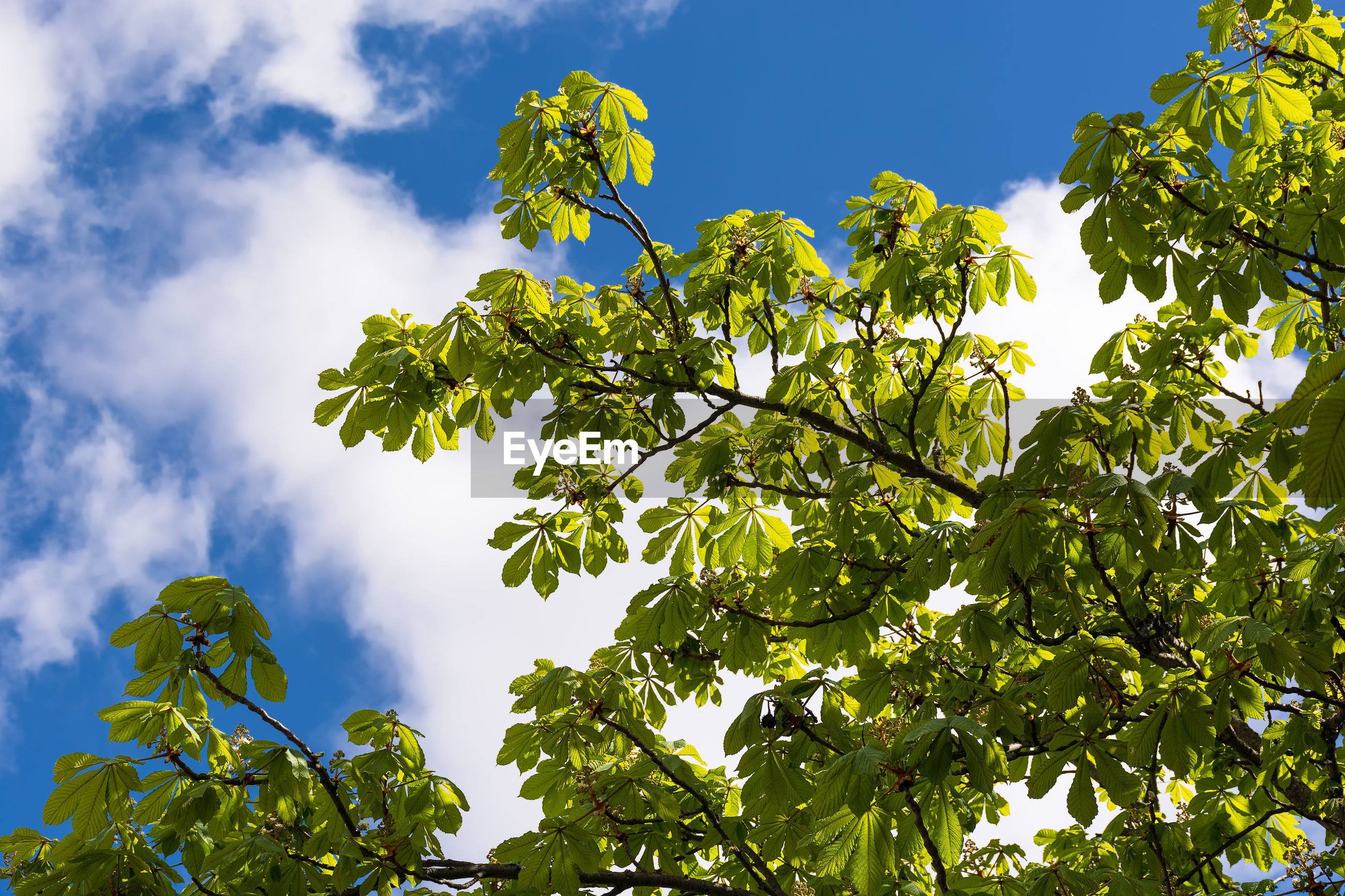 LOW ANGLE VIEW OF FRESH GREEN PLANTS AGAINST SKY