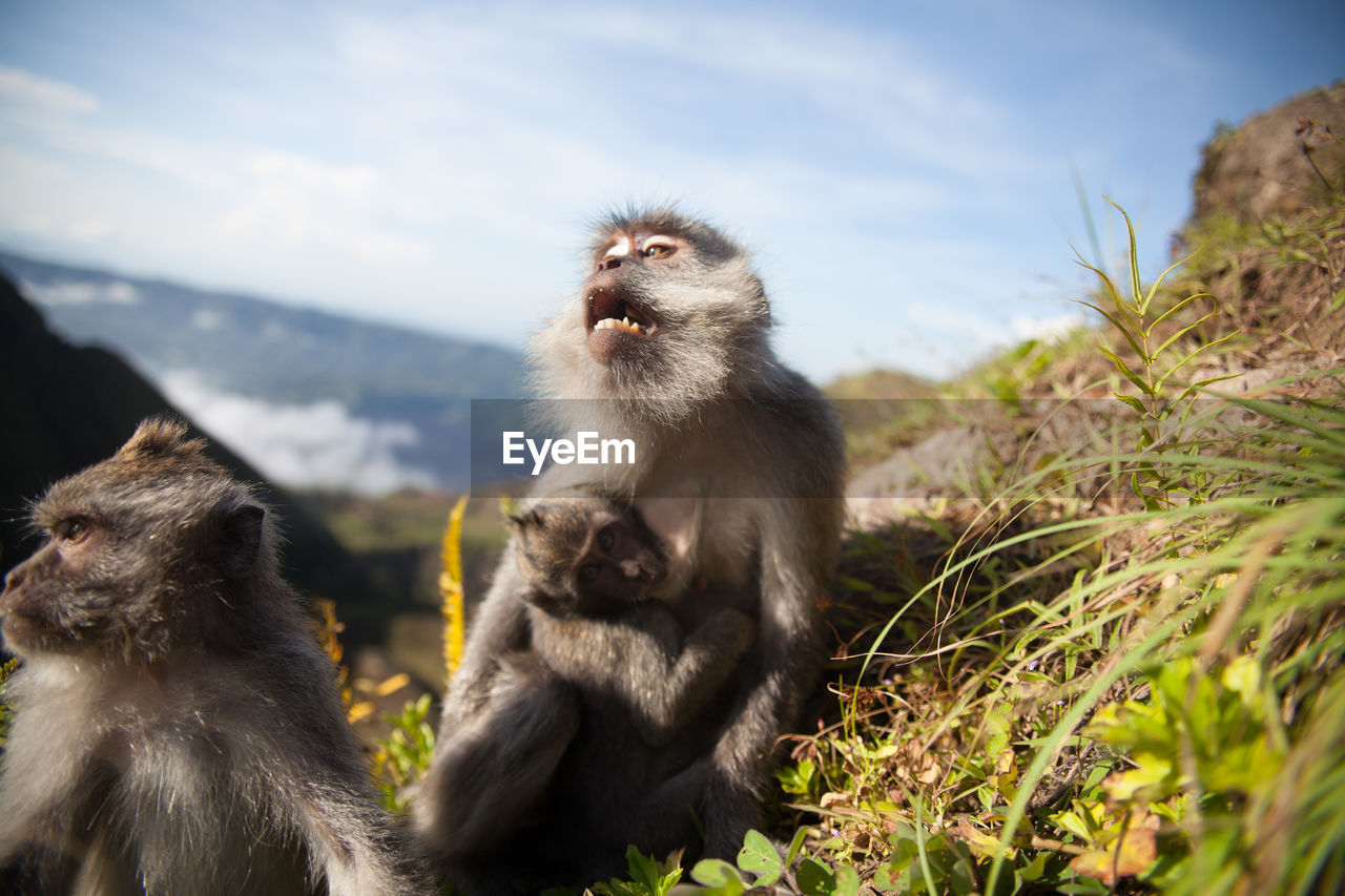 animal themes, monkey, two animals, animals in the wild, primate, togetherness, mammal, infant, nature, animal wildlife, day, outdoors, young animal, sky, animal family, focus on foreground, sitting, mountain, beauty in nature, close-up, baboon, japanese macaque
