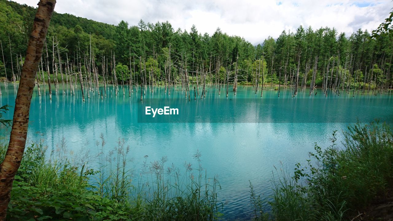 tree, plant, water, tranquility, beauty in nature, tranquil scene, scenics - nature, sky, lake, forest, nature, growth, cloud - sky, non-urban scene, land, no people, reflection, day, green color, outdoors, turquoise colored