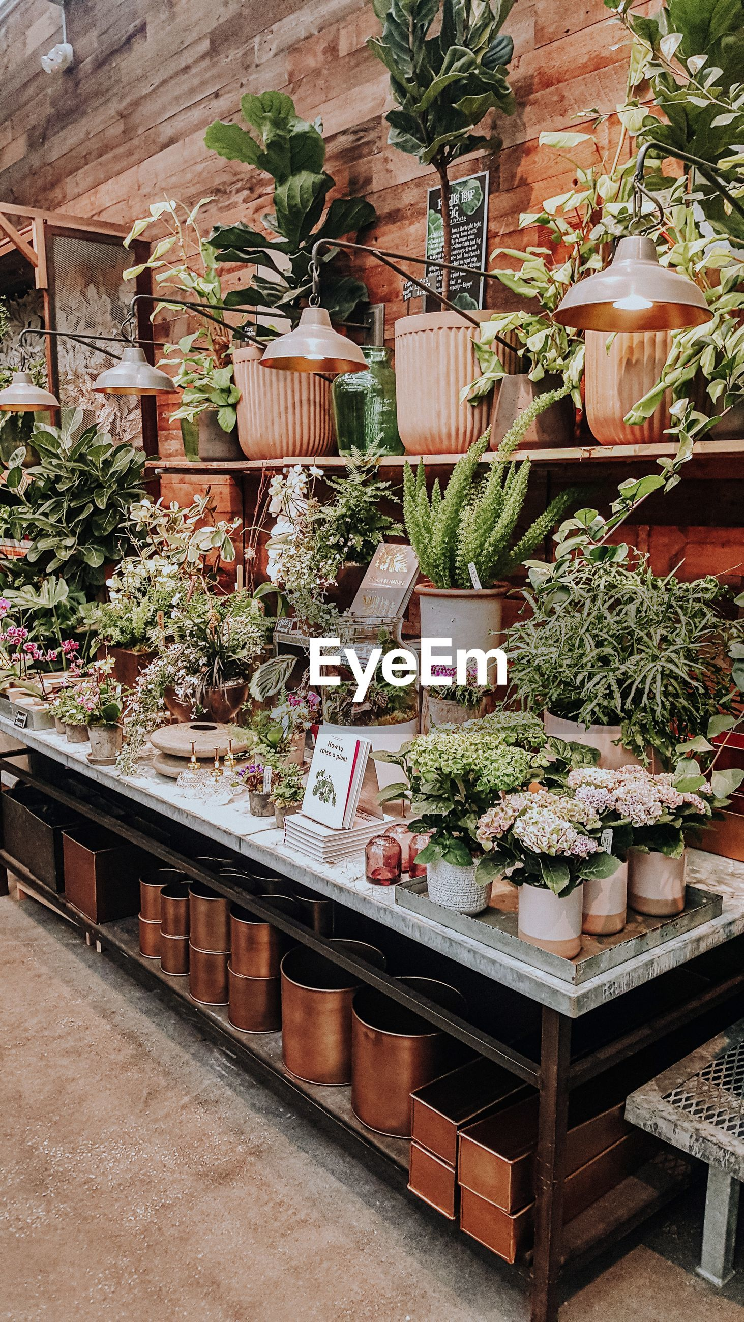 HIGH ANGLE VIEW OF POTTED PLANTS IN SHOP