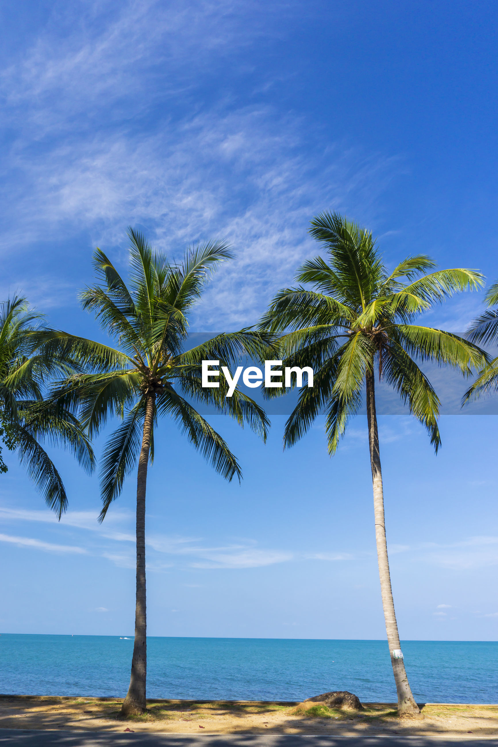 PALM TREES ON SHORE AGAINST SKY