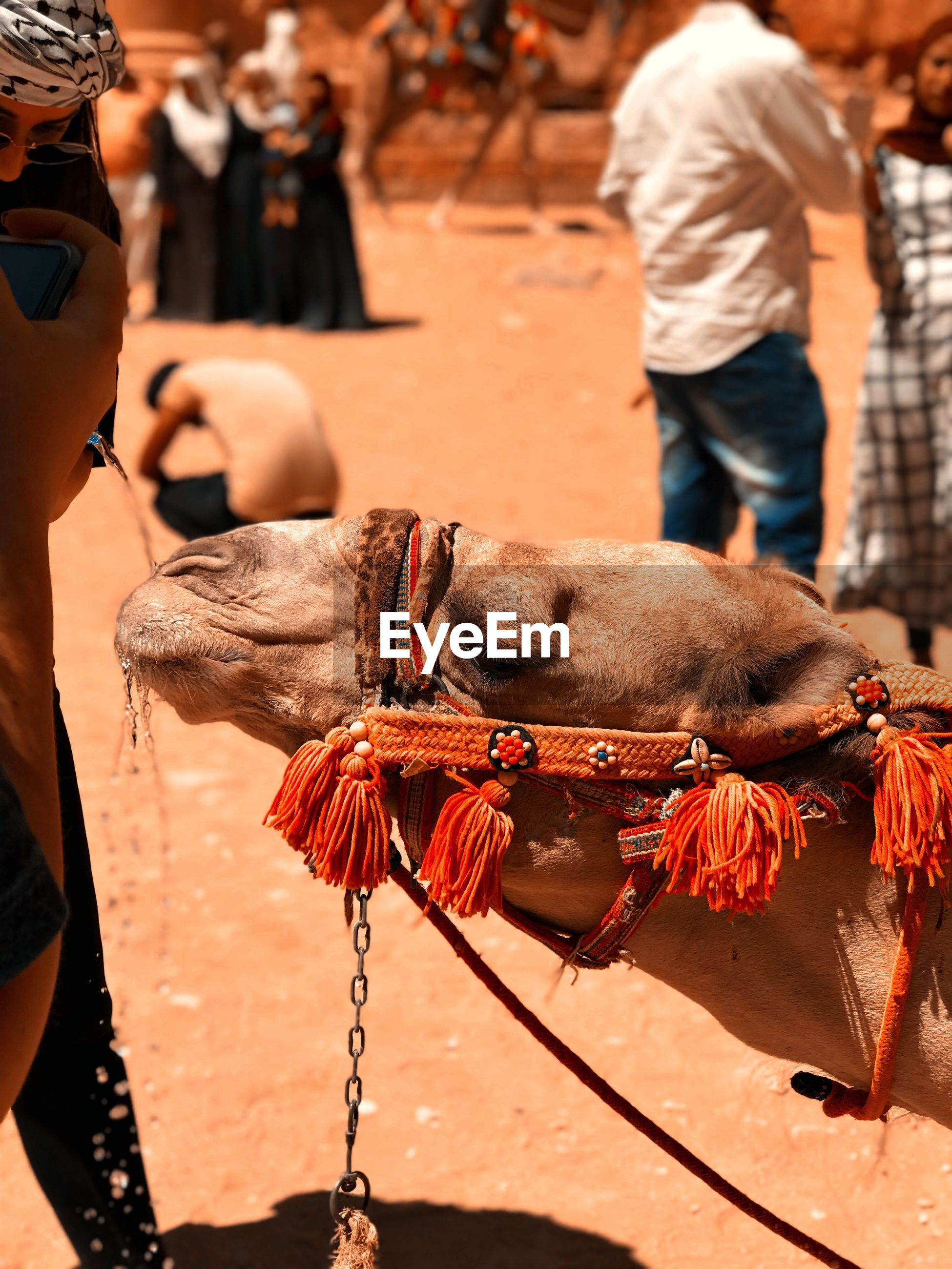 Close-up of camel in market