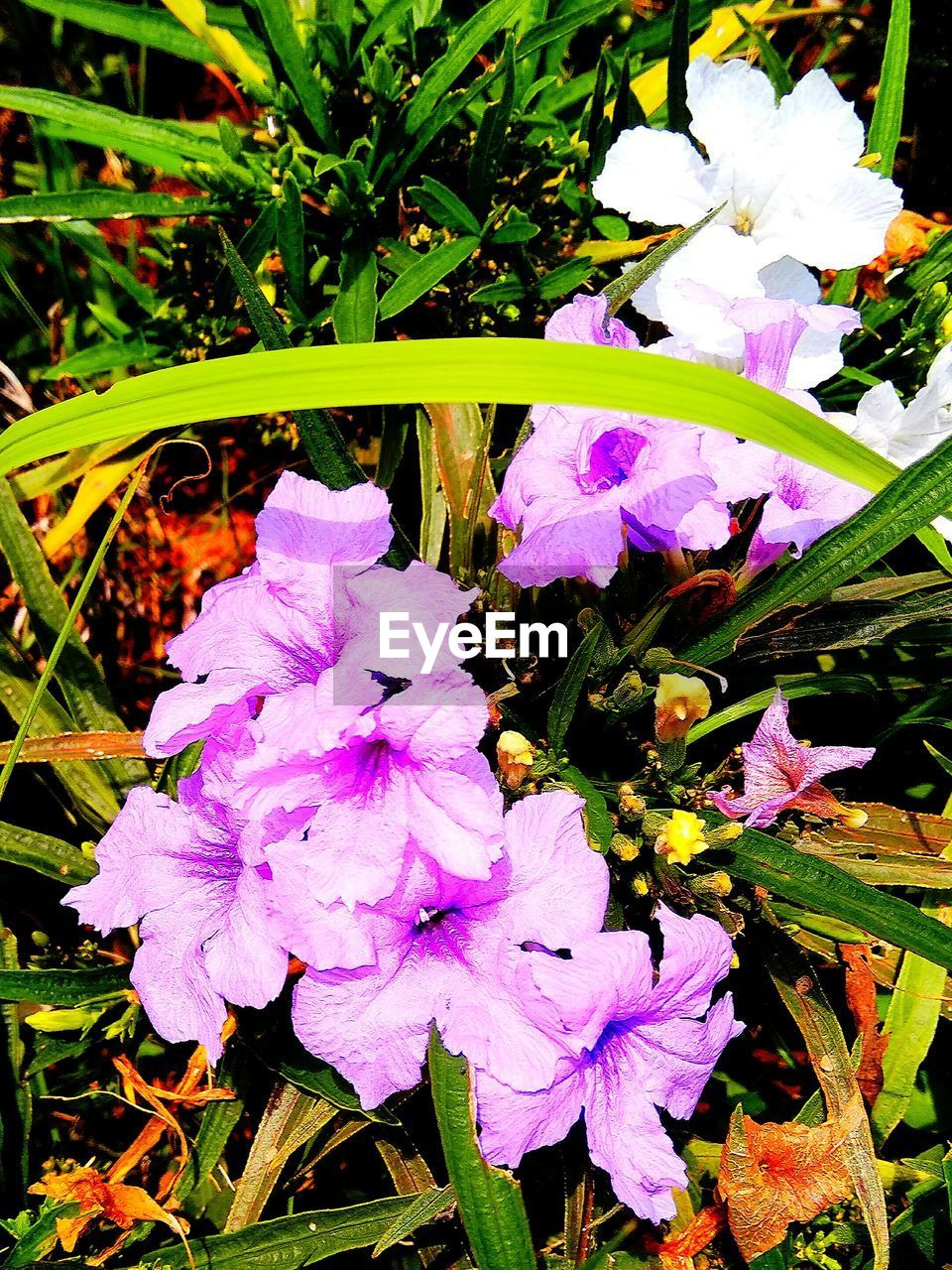 flower, growth, petal, beauty in nature, fragility, freshness, purple, nature, flower head, plant, no people, day, outdoors, blooming, close-up
