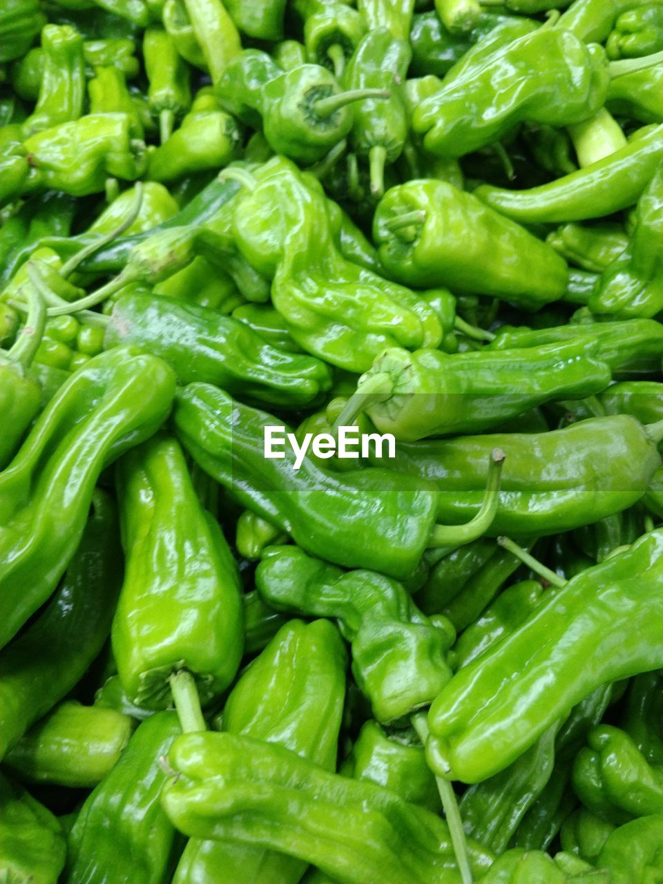 FULL FRAME OF GREEN CHILI PEPPERS