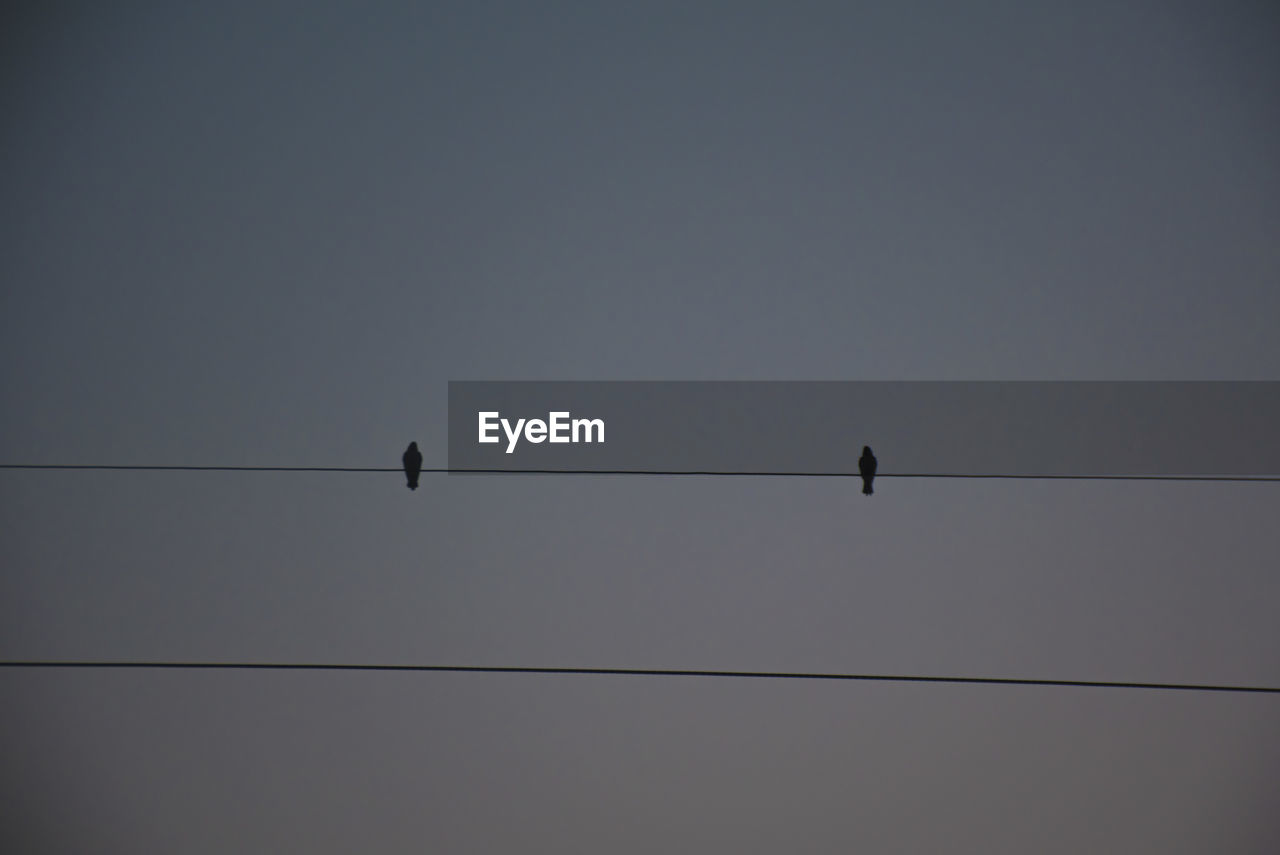cable, vertebrate, bird, animal, sky, animal themes, animals in the wild, animal wildlife, perching, connection, electricity, power line, low angle view, silhouette, group of animals, no people, nature, clear sky, power supply, outdoors, flock of birds, telephone line