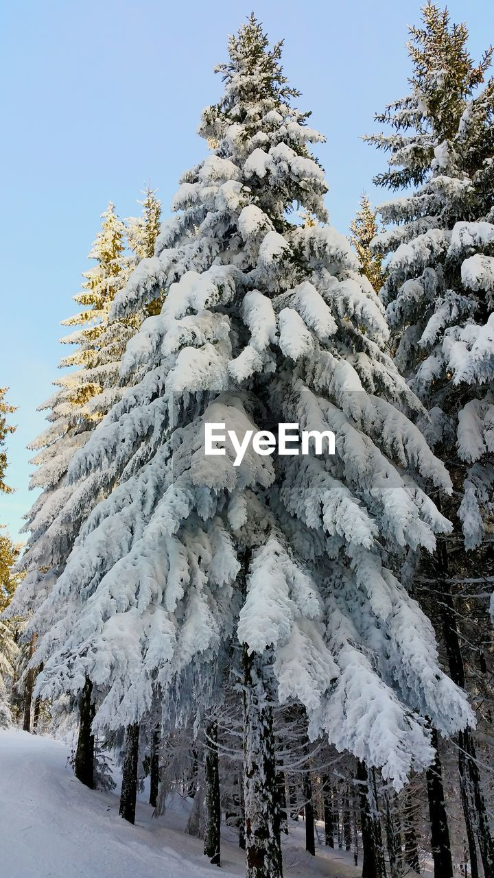 snow, winter, cold temperature, tree, nature, beauty in nature, weather, white color, white, tranquil scene, tranquility, scenics, no people, day, outdoors, low angle view, landscape, frozen, sky, mountain, clear sky