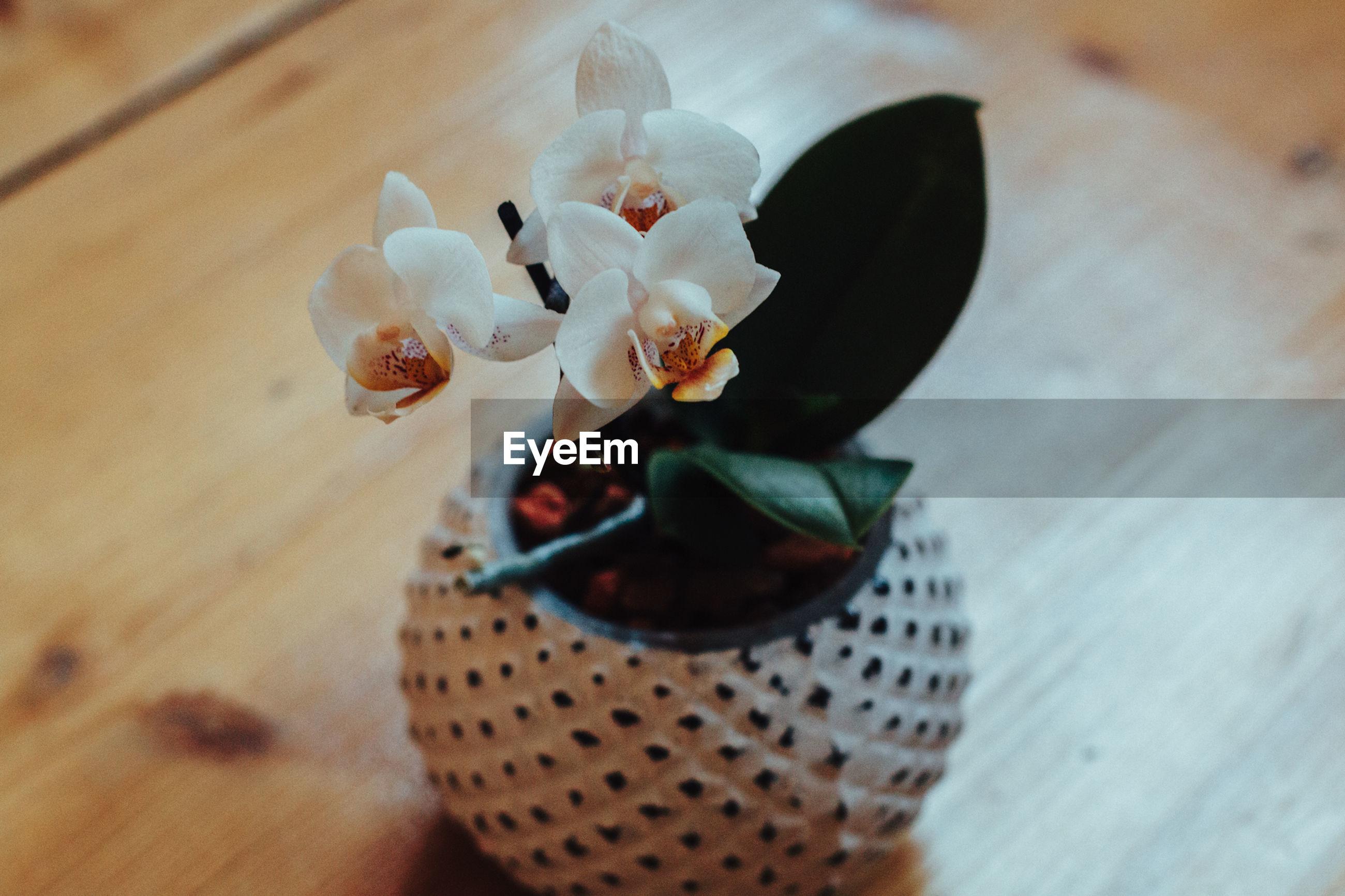 Close-up of flower vase on hardwood floor