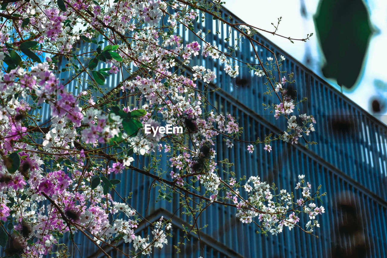 LOW ANGLE VIEW OF FLOWERING PLANTS AGAINST BUILDING