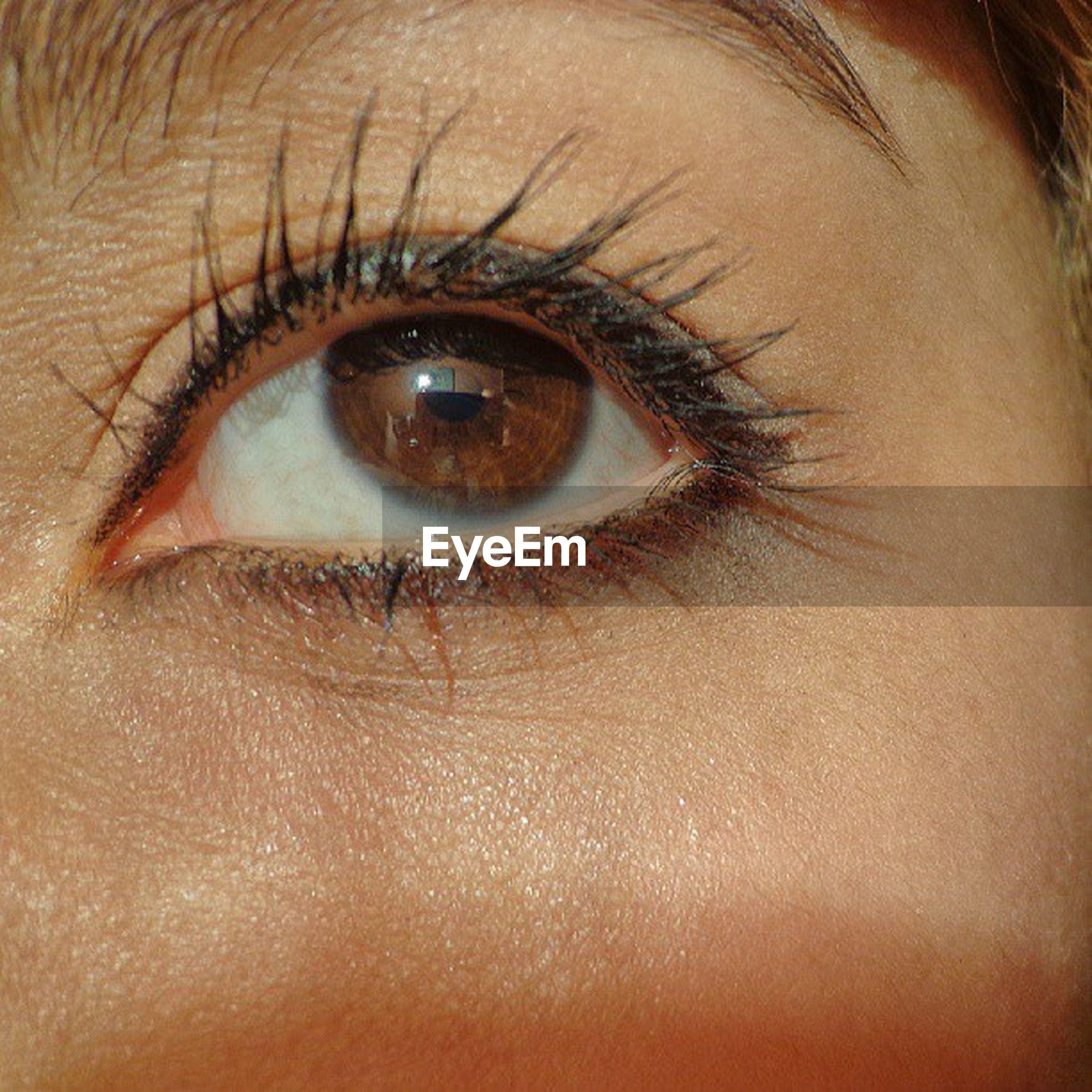human eye, eyelash, close-up, eyesight, looking at camera, human skin, extreme close-up, portrait, sensory perception, part of, iris - eye, eyeball, human face, extreme close up, eyebrow, full frame, indoors