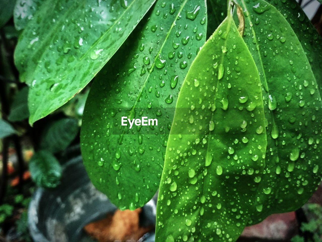 drop, leaf, wet, green color, water, raindrop, rain, close-up, water drop, rainy season, droplet, growth, freshness, nature, weather, no people, day, outdoors, plant, beauty in nature, fragility