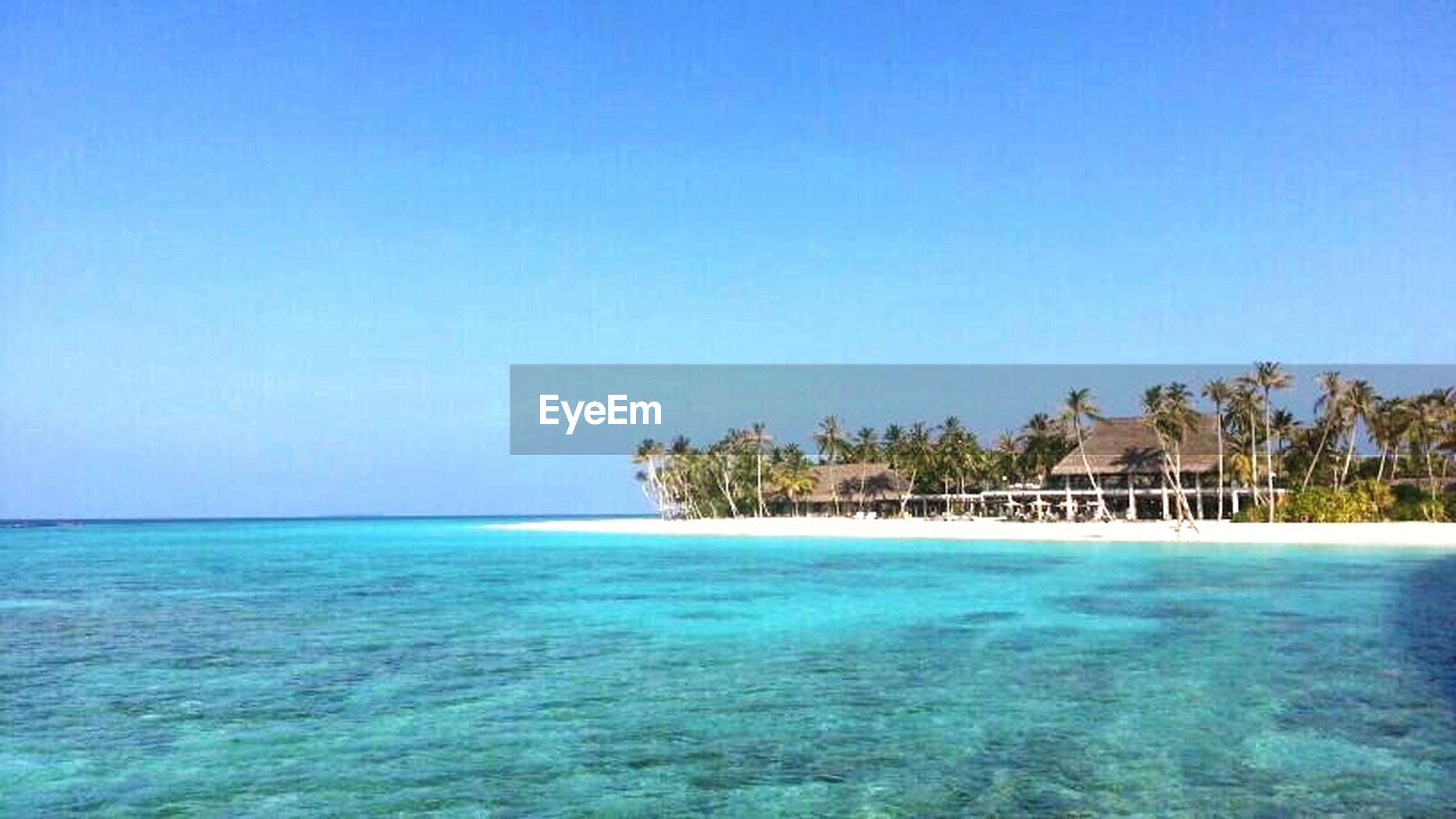 blue, water, sea, clear sky, copy space, tranquil scene, beach, tranquility, scenics, horizon over water, beauty in nature, nature, tree, palm tree, waterfront, shore, idyllic, sand, turquoise colored, swimming pool