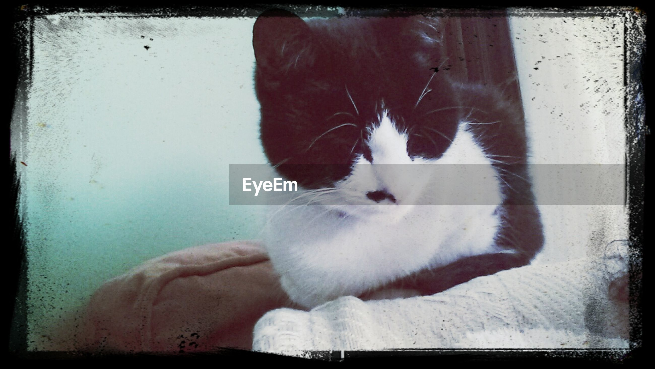 domestic cat, cat, pets, domestic animals, animal themes, one animal, feline, mammal, indoors, transfer print, whisker, auto post production filter, relaxation, home interior, close-up, portrait, white color, resting, looking at camera, zoology
