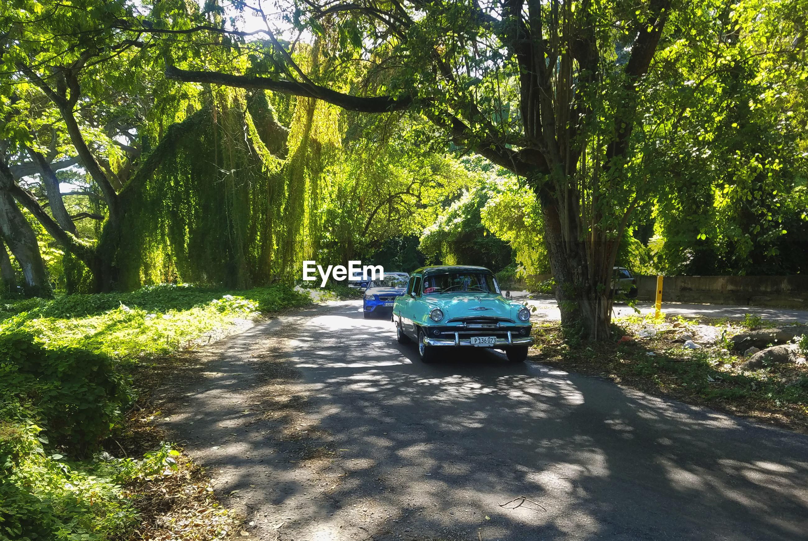 Classic car on road along trees