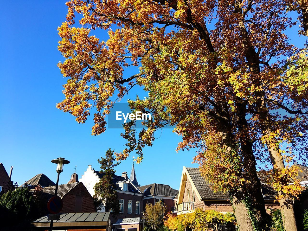 tree, plant, architecture, building exterior, built structure, sky, building, nature, growth, autumn, low angle view, day, clear sky, change, no people, sunlight, blue, outdoors, house, branch