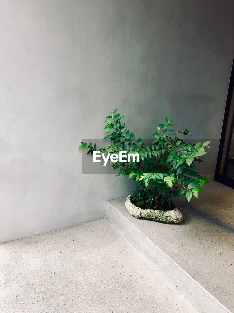 plant, growth, wall - building feature, no people, nature, green color, plant part, leaf, potted plant, day, indoors, built structure, architecture, beauty in nature, wall, freshness, white color, vulnerability, houseplant