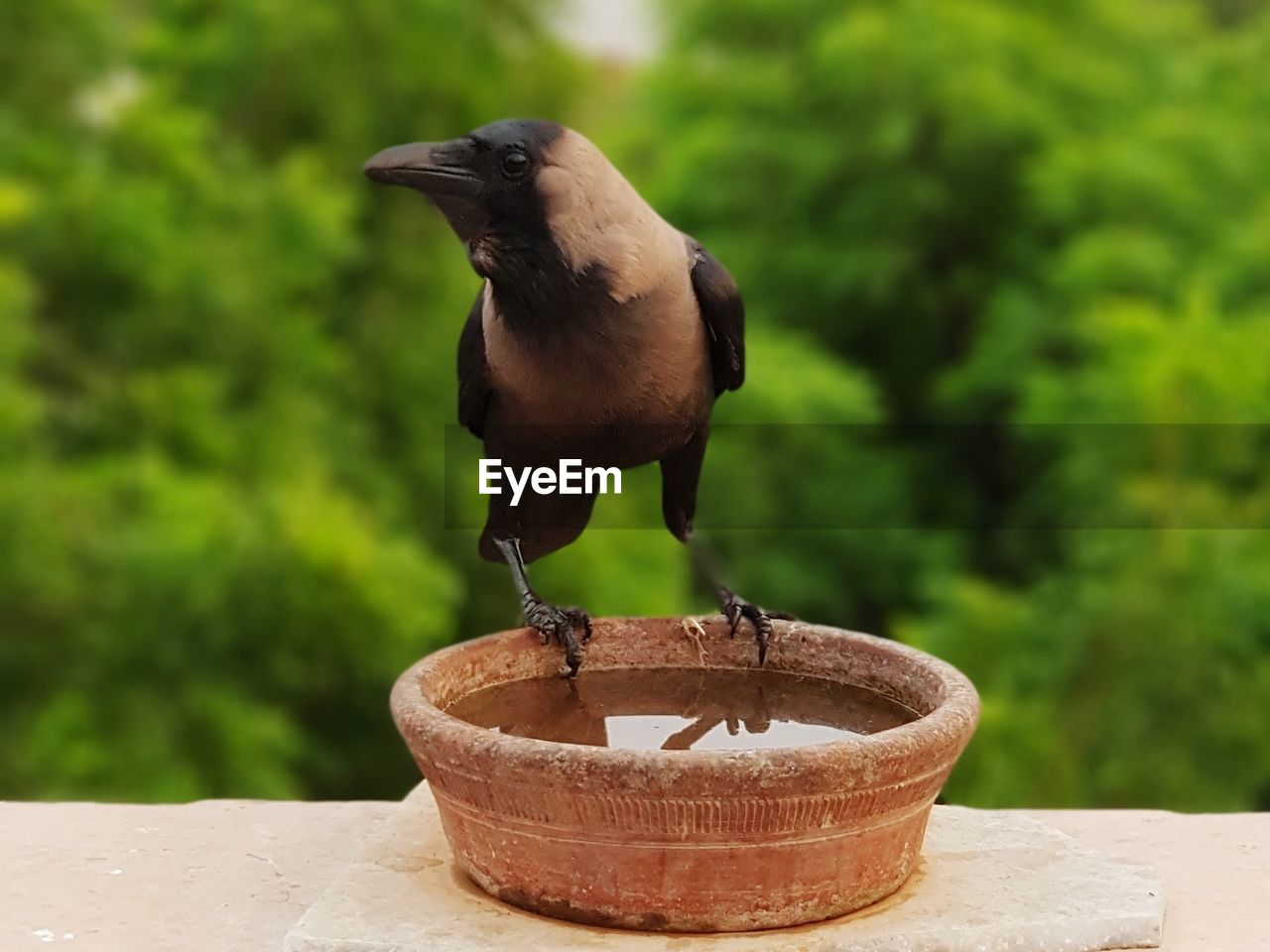 focus on foreground, one animal, plant, no people, vertebrate, day, animal themes, animal, nature, bird, animals in the wild, green color, tree, animal wildlife, perching, outdoors, retaining wall, close-up, potted plant, black color