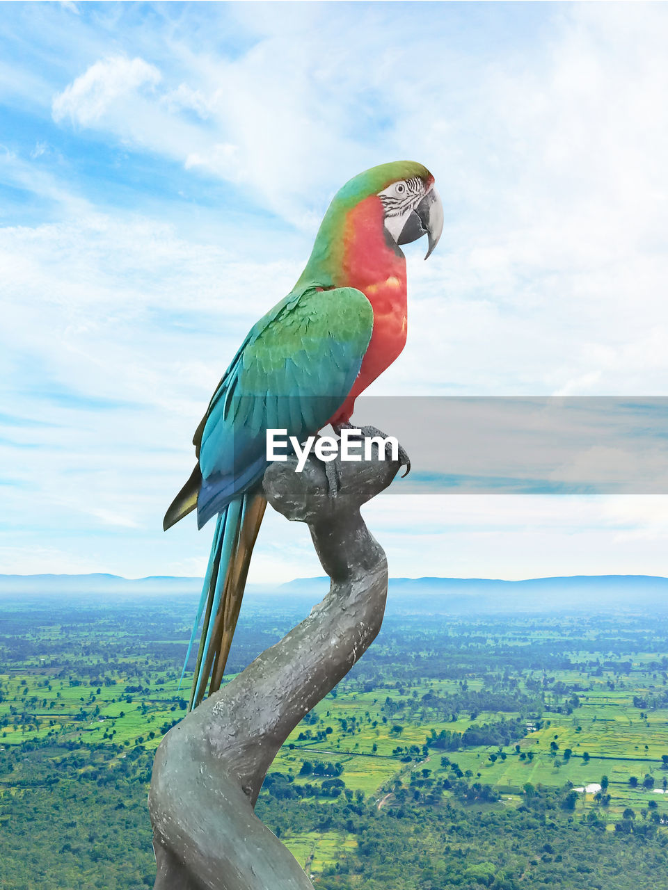 bird, animal themes, animal, vertebrate, sky, animal wildlife, parrot, animals in the wild, beauty in nature, green color, perching, cloud - sky, nature, no people, day, plant, tree, environment, one animal, outdoors