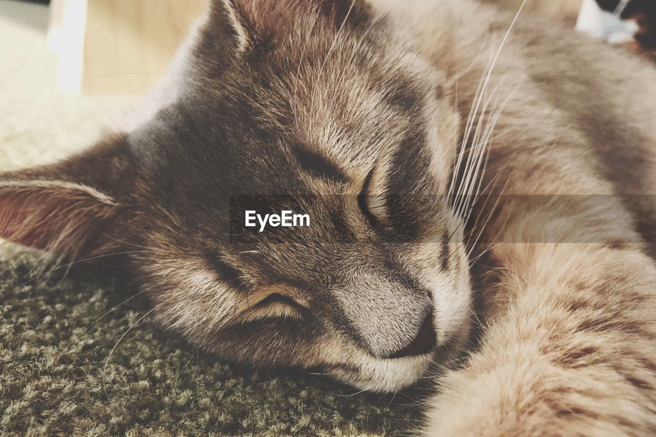 Close-up of cat sleeping on rug