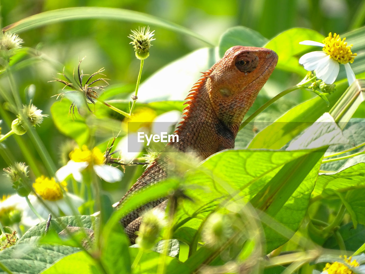animal, animal themes, one animal, plant, animals in the wild, animal wildlife, flower, flowering plant, green color, growth, nature, vertebrate, beauty in nature, day, close-up, leaf, no people, plant part, selective focus, reptile, outdoors, butterfly - insect, flower head