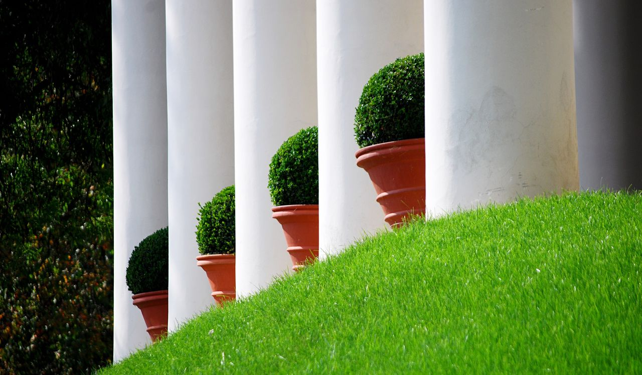 green color, plant, architecture, grass, built structure, no people, growth, architectural column, nature, day, outdoors, in a row, white color, tree, building exterior, potted plant, sunlight, building, green, lawn, hedge, colonnade