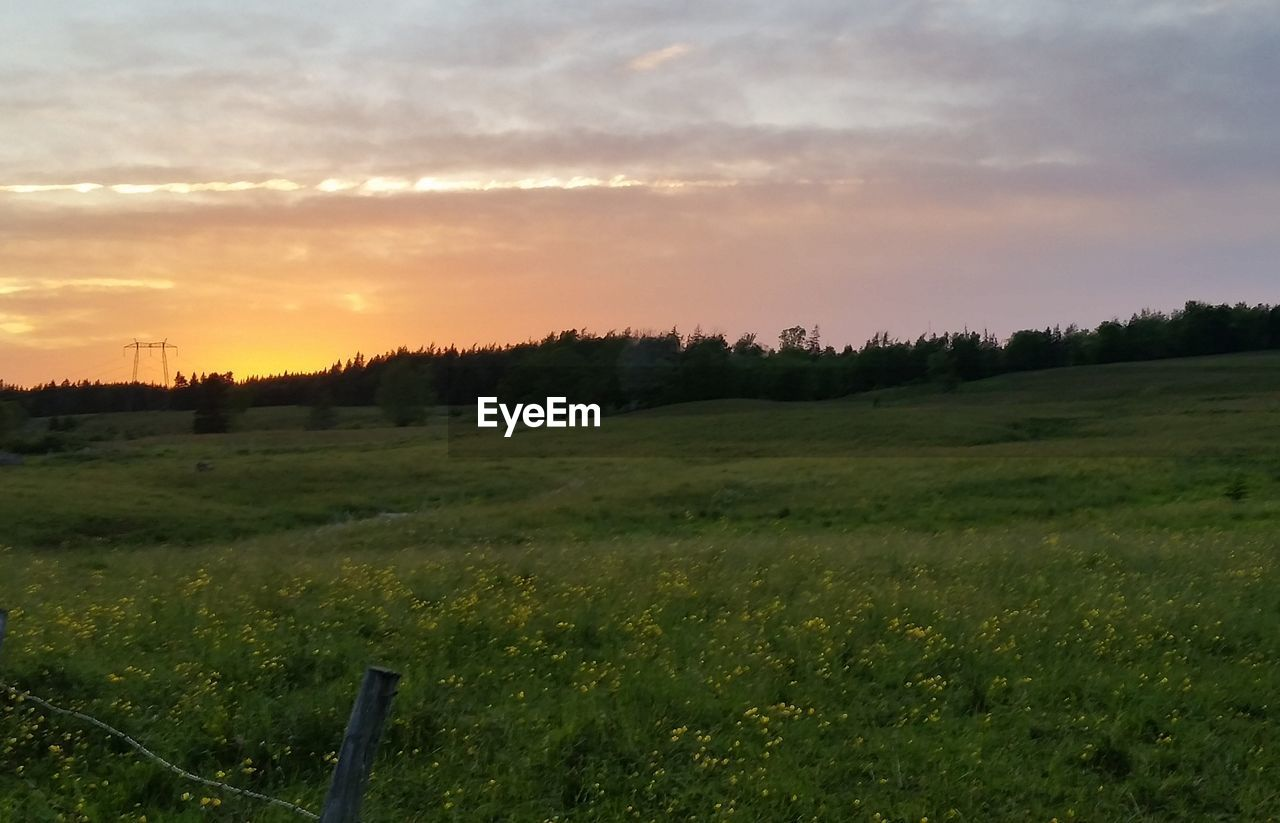 SCENIC VIEW OF GRASSY FIELD AGAINST SKY DURING SUNSET