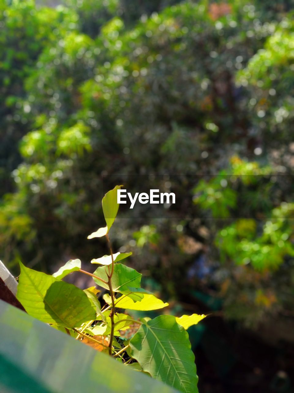 growth, plant, leaf, nature, green color, no people, day, outdoors, fragility, close-up, freshness, beauty in nature