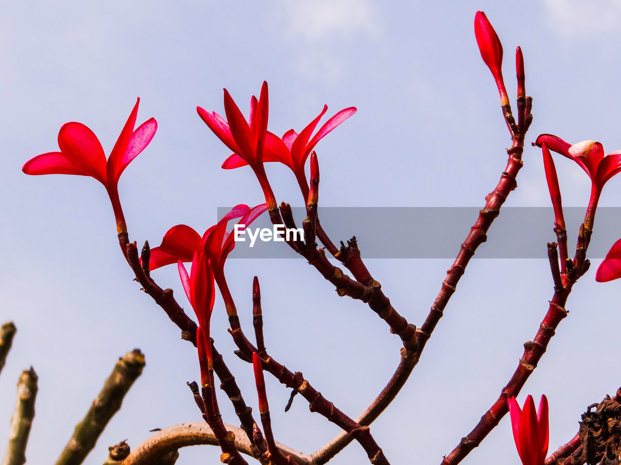 red, flower, growth, nature, beauty in nature, petal, low angle view, fragility, freshness, plant, no people, day, outdoors, close-up, sky, flower head, blooming