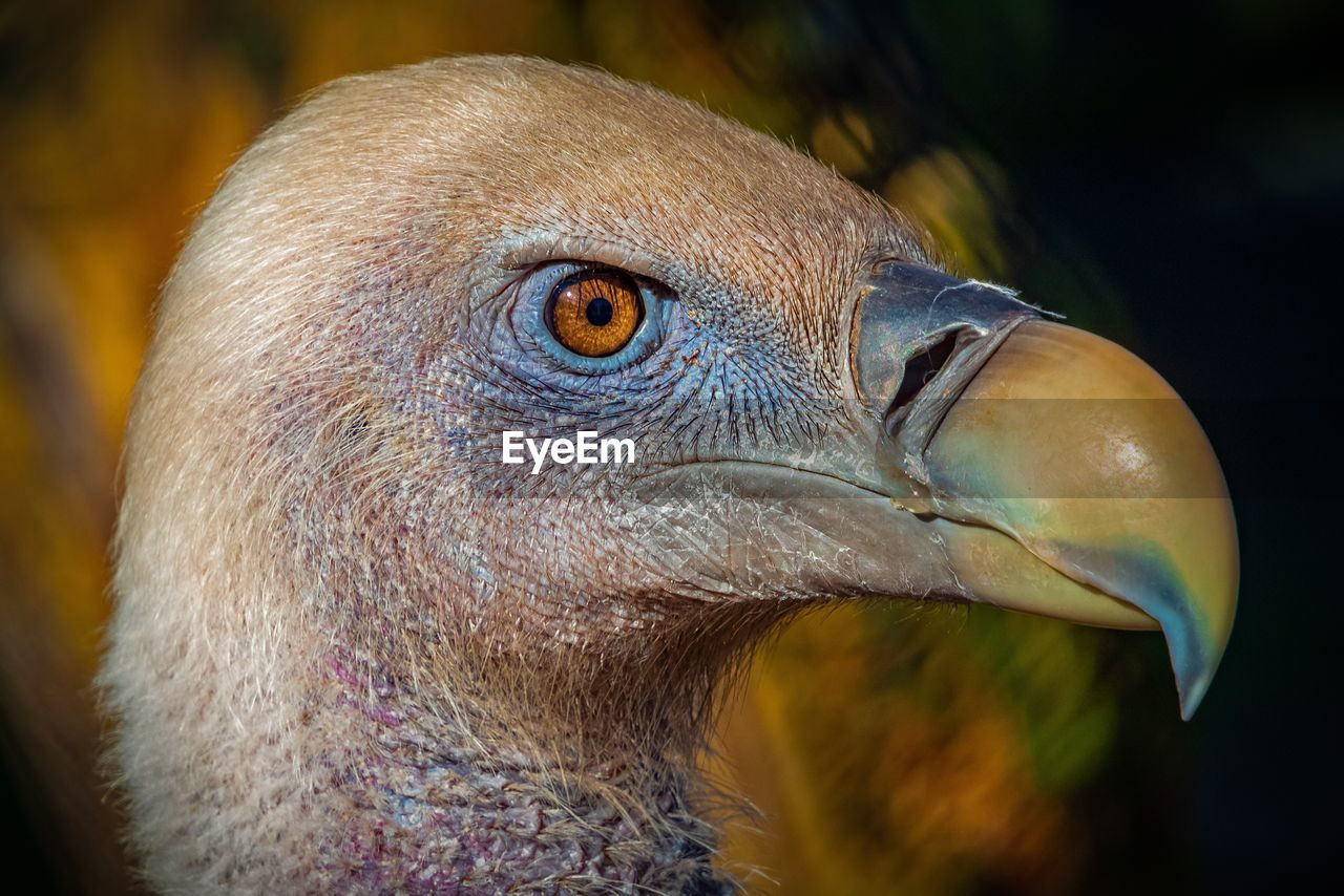 bird, animal themes, animal, vertebrate, one animal, animal wildlife, close-up, animals in the wild, focus on foreground, animal body part, beak, animal head, looking, no people, looking away, eye, day, animal eye, bird of prey, nature, profile view