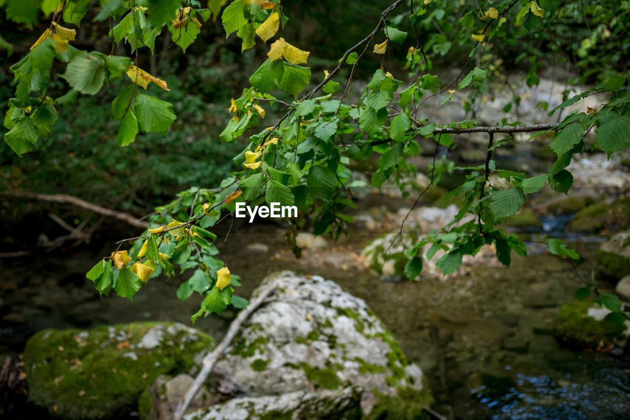 growth, plant, nature, leaf, day, outdoors, no people, green color, freshness, tree, close-up, vine - plant, beauty in nature, fragility