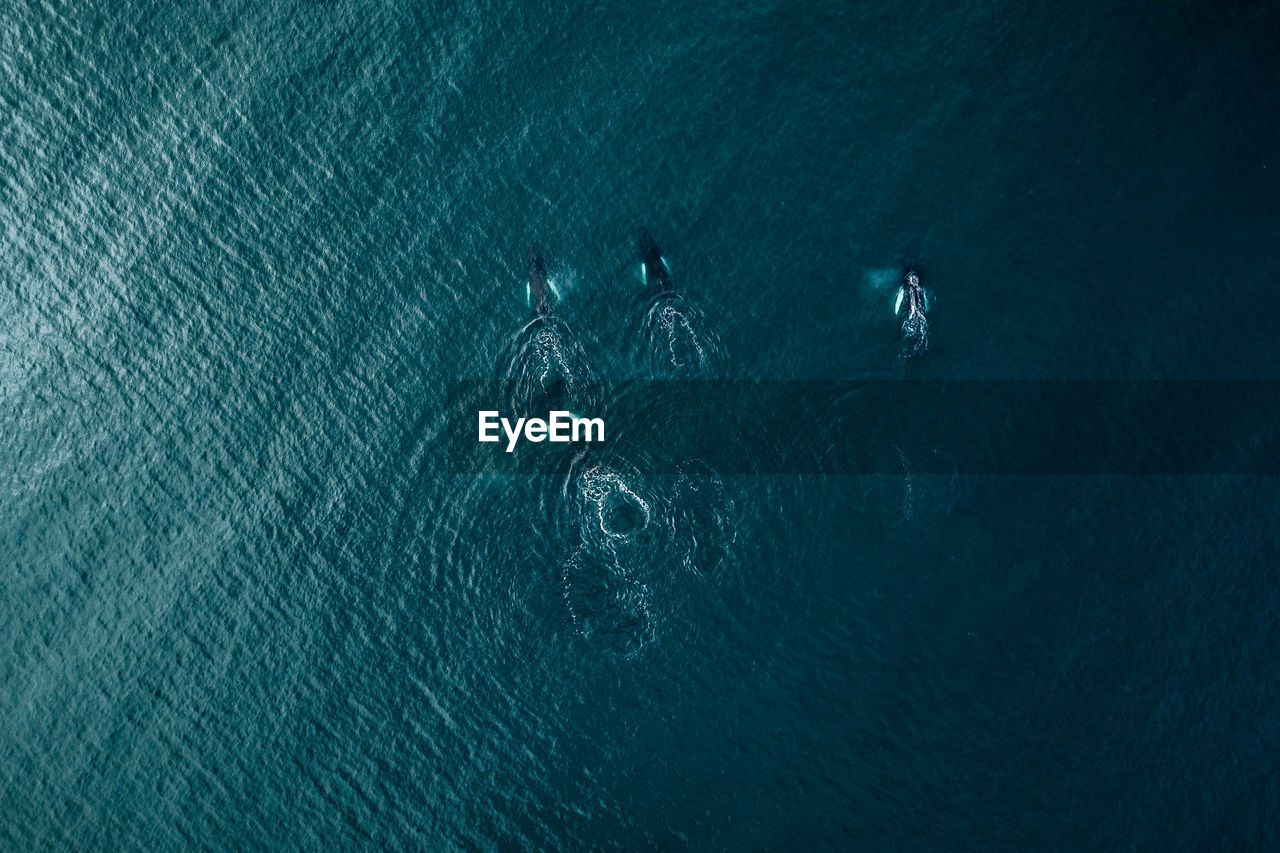 Aerial View Of Killer Whales Swimming In Sea
