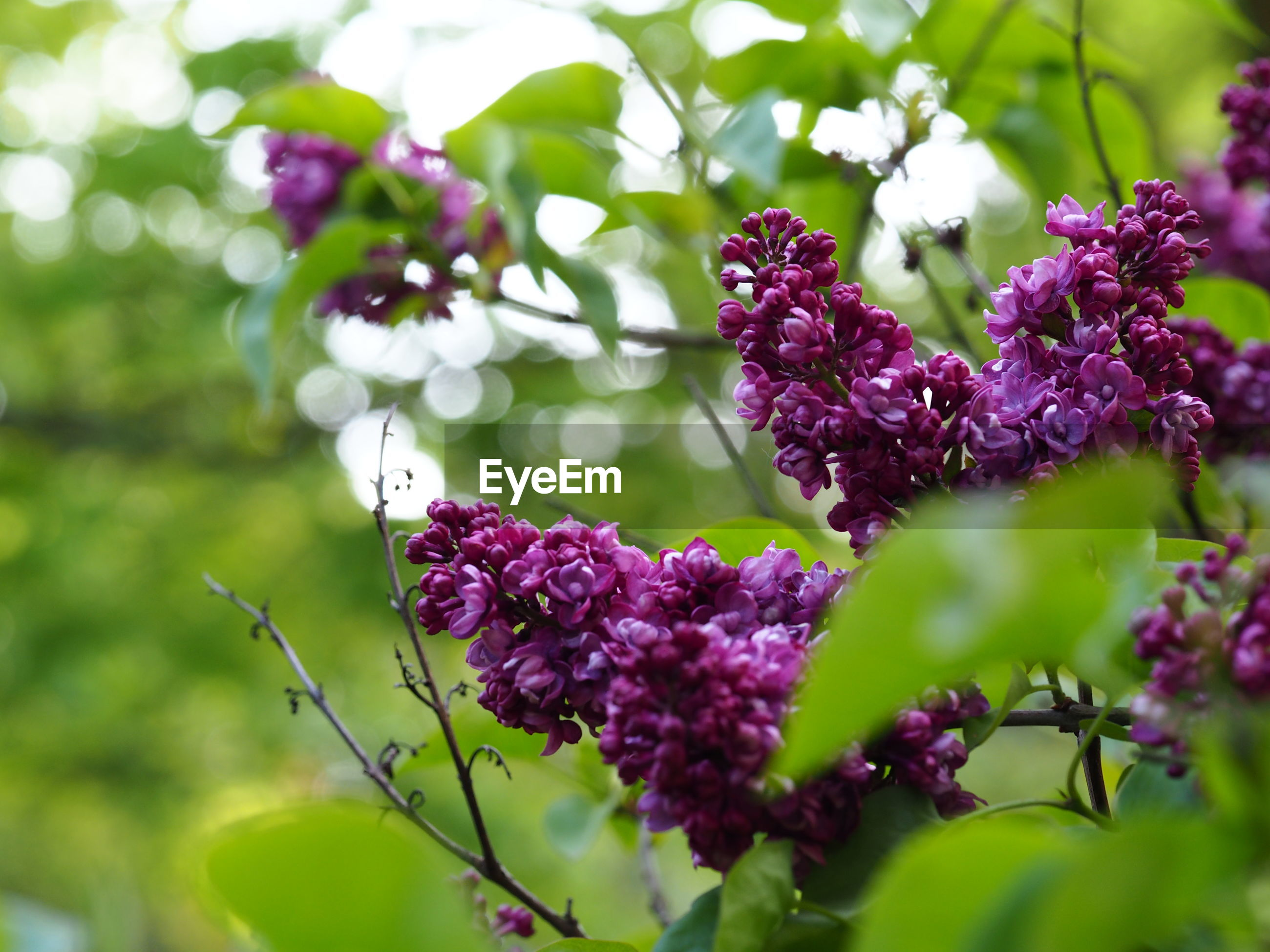 LOW ANGLE VIEW OF PURPLE FLOWERS BLOOMING OUTDOORS