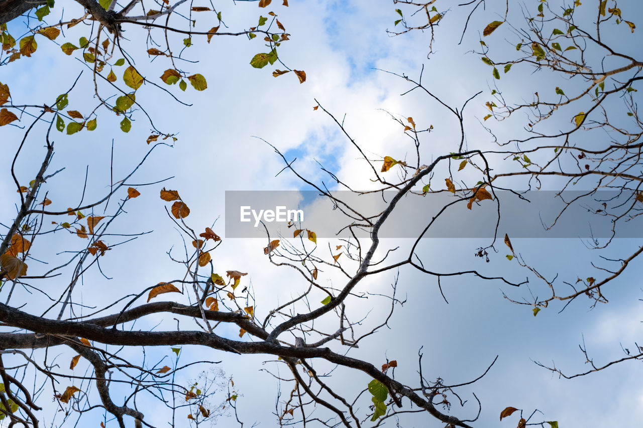 tree, branch, sky, plant, low angle view, cloud - sky, nature, growth, day, beauty in nature, no people, outdoors, bird, bare tree, animal wildlife, tranquility, vertebrate, animal themes, animals in the wild, animal