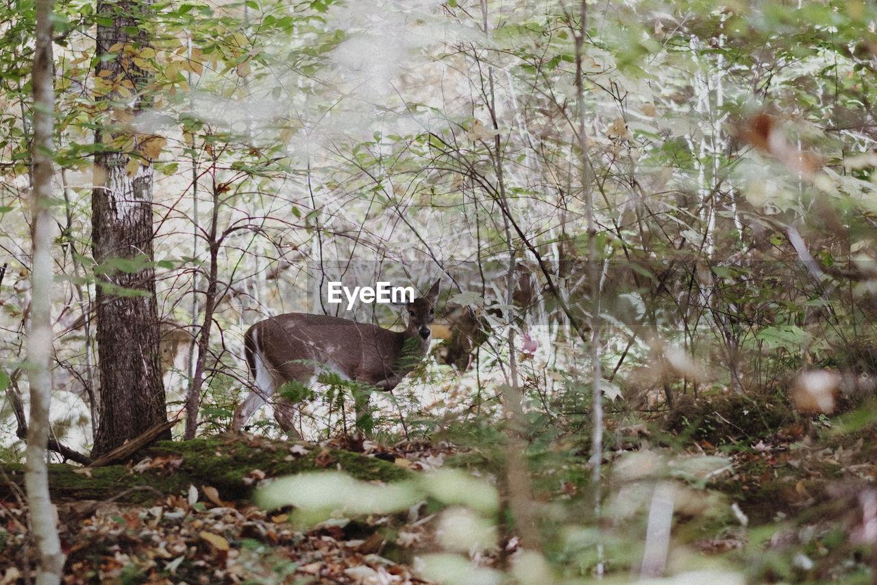 Side view of a deer on landscape