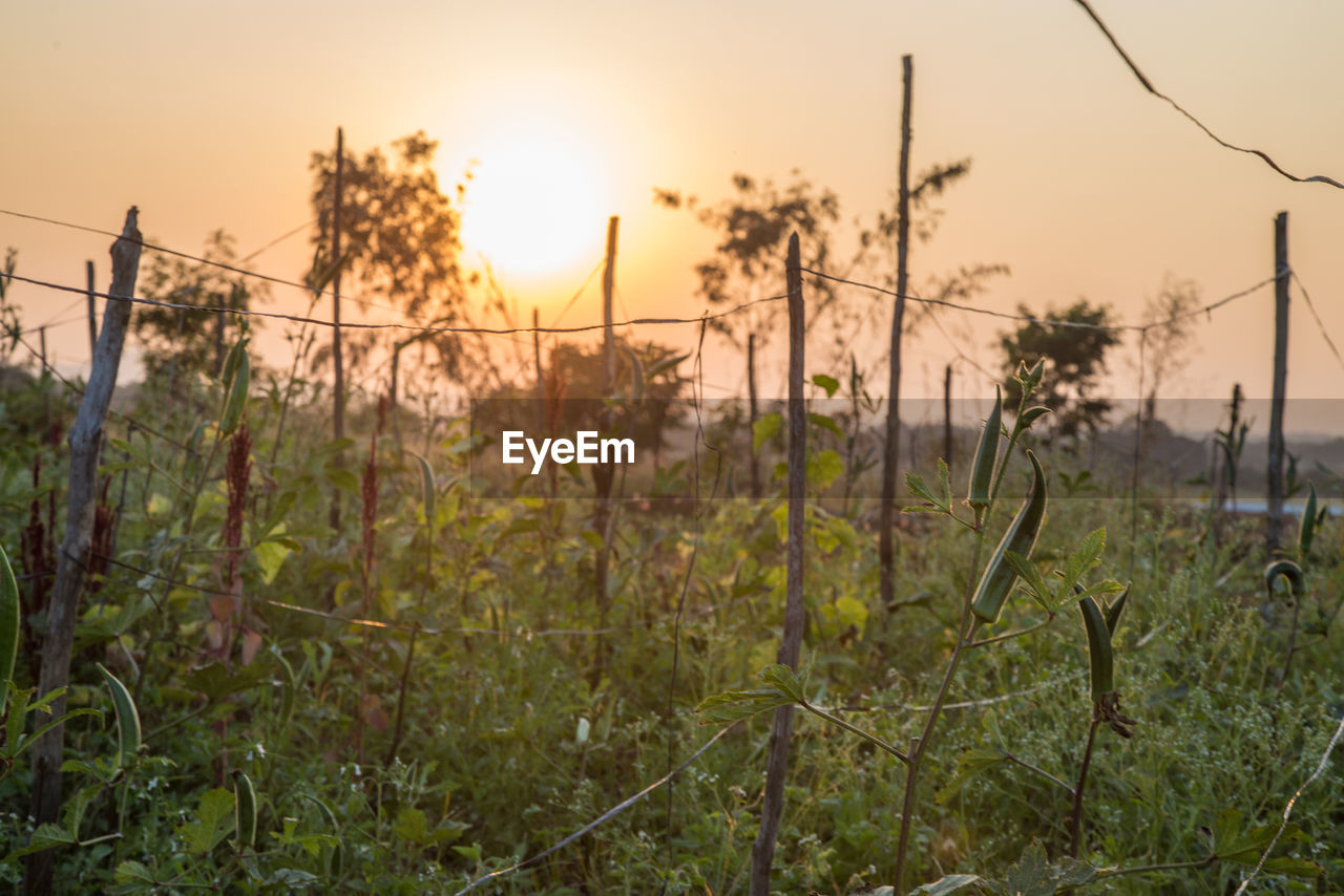 growth, nature, sunset, no people, tranquility, plant, beauty in nature, scenics, outdoors, sky, day