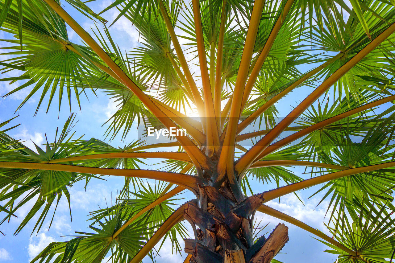 tropical climate, palm tree, growth, plant, tree, leaf, low angle view, no people, beauty in nature, palm leaf, sky, nature, plant part, day, green color, tranquility, outdoors, close-up, tropical tree, sunlight, coconut palm tree