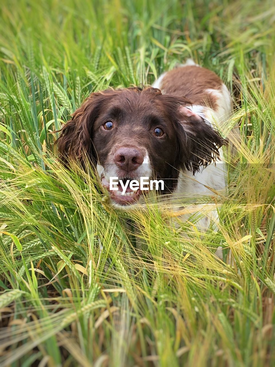 Portrait Of Dog Amidst Plants On Field