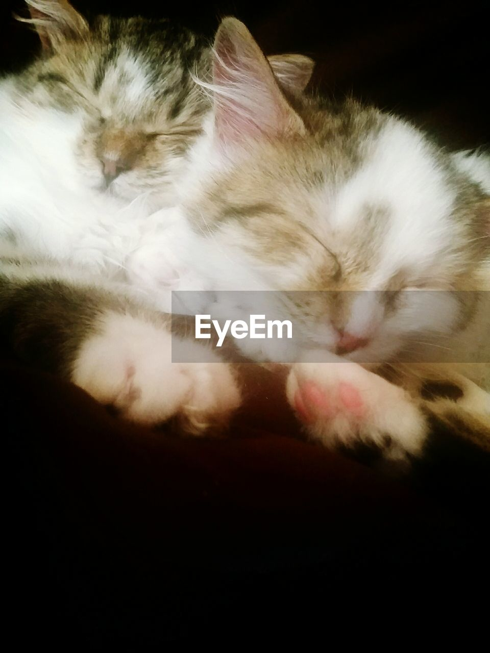 domestic, mammal, pets, domestic animals, cat, animal themes, animal, domestic cat, feline, one animal, vertebrate, relaxation, sleeping, eyes closed, indoors, resting, no people, close-up, lying down, whisker, animal head, napping