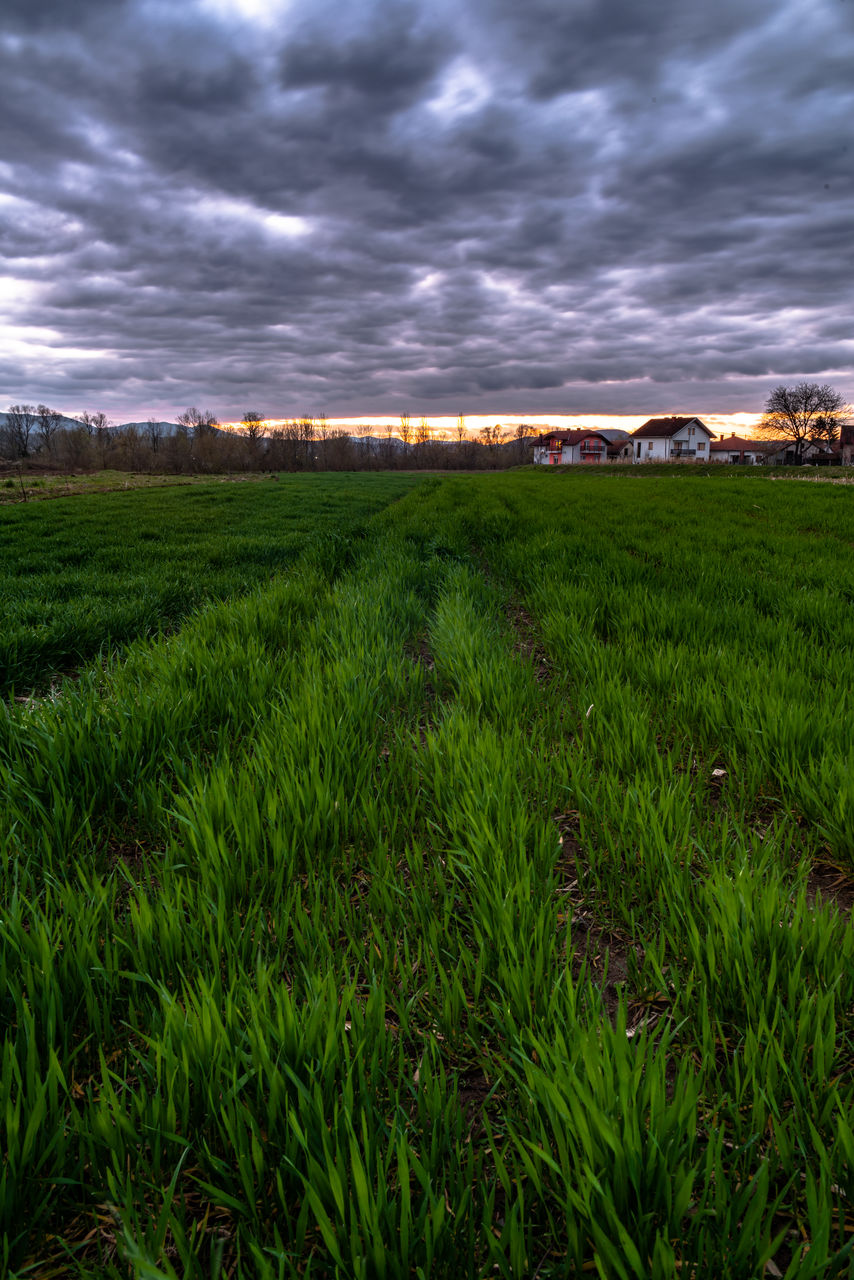 cloud - sky, sky, plant, environment, scenics - nature, landscape, land, grass, tranquil scene, tranquility, beauty in nature, field, green color, growth, nature, overcast, no people, non-urban scene, storm