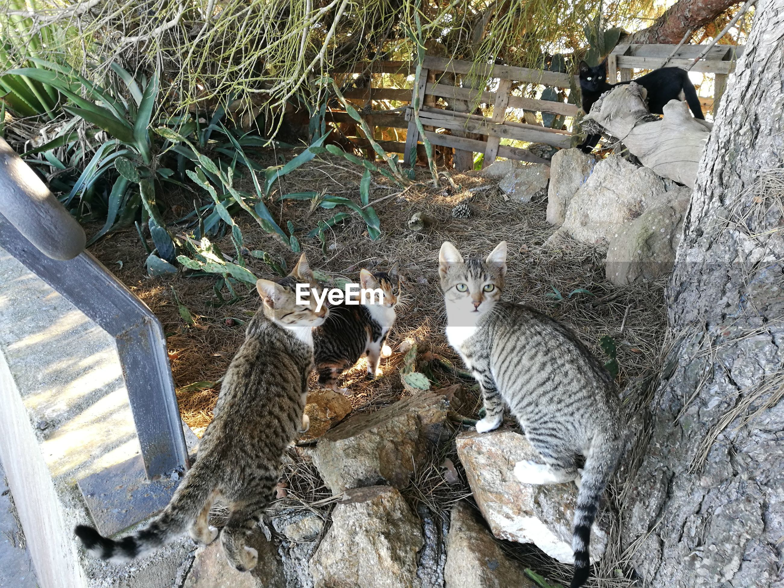 animal themes, domestic animals, domestic cat, mammal, no people, high angle view, day, feline, outdoors, bird, pets, young animal, nature