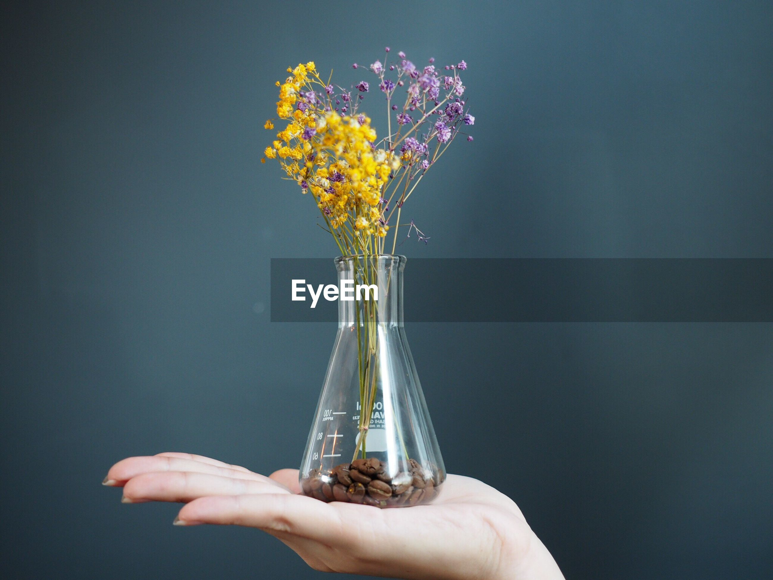 Close-up of hand holding flowers in vase against wall