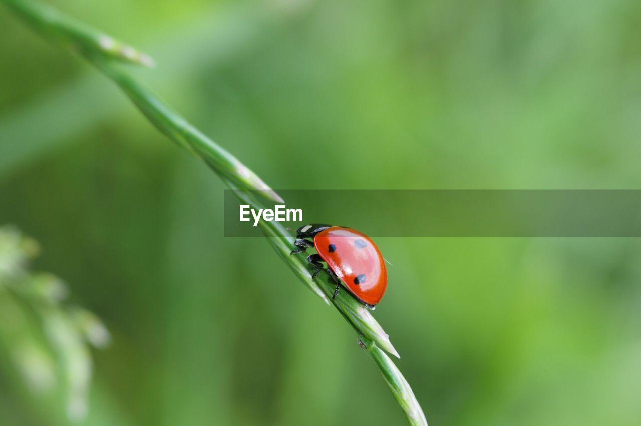 Close-up of lady bug on leaf