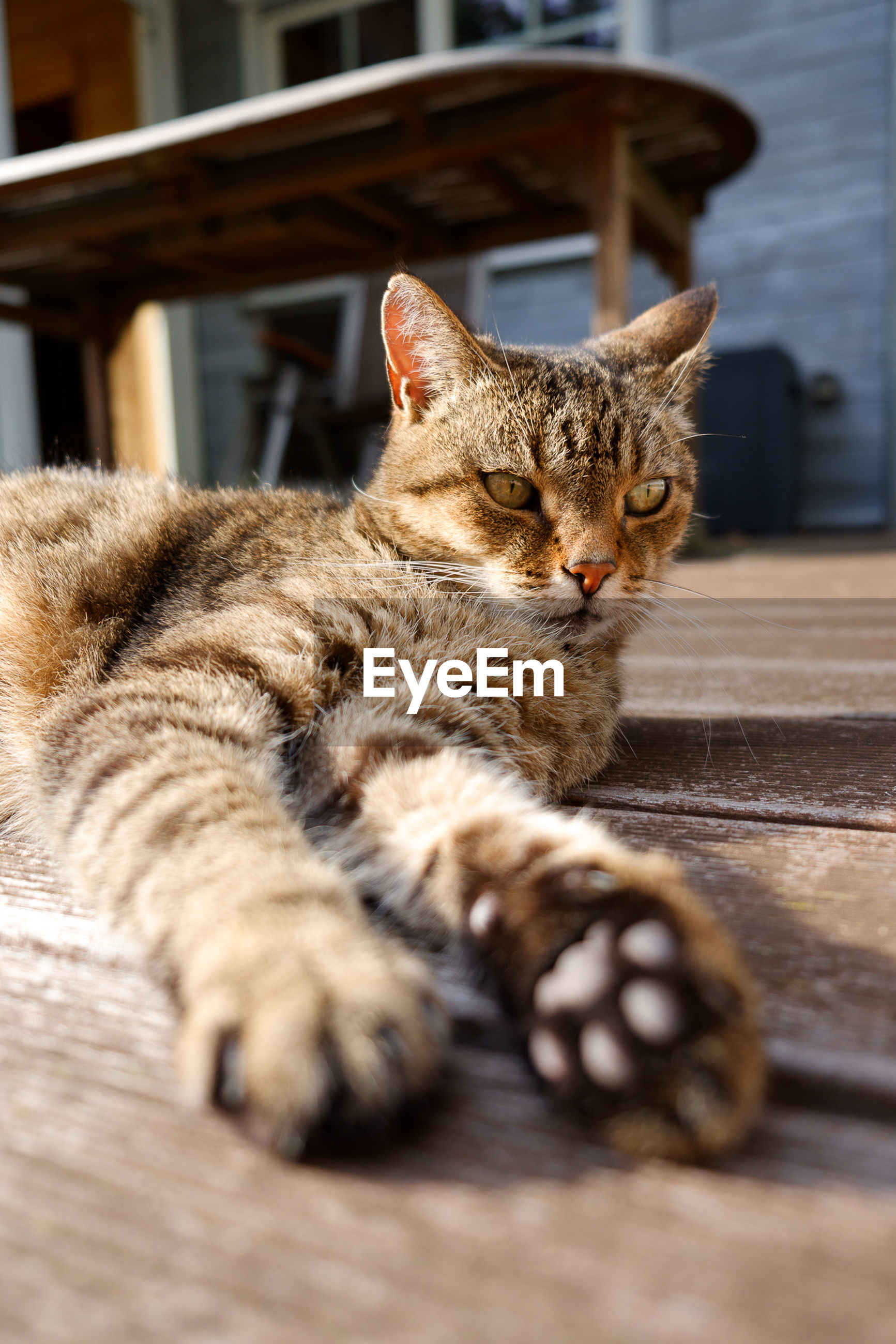 CAT LYING ON A FLOOR