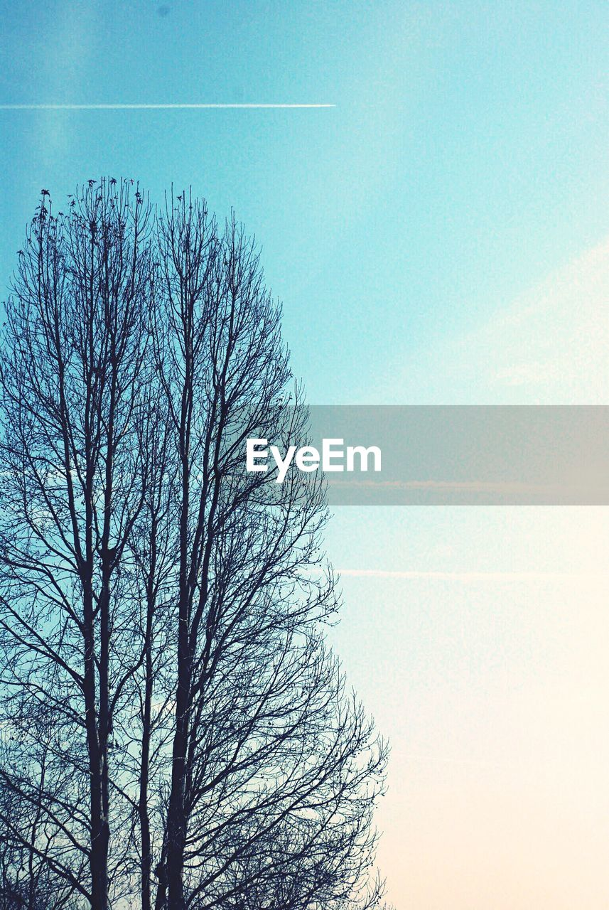 bare tree, tree, nature, beauty in nature, clear sky, no people, outdoors, tranquility, sky, day, tranquil scene, blue, branch, low angle view, scenics, vapor trail, contrail