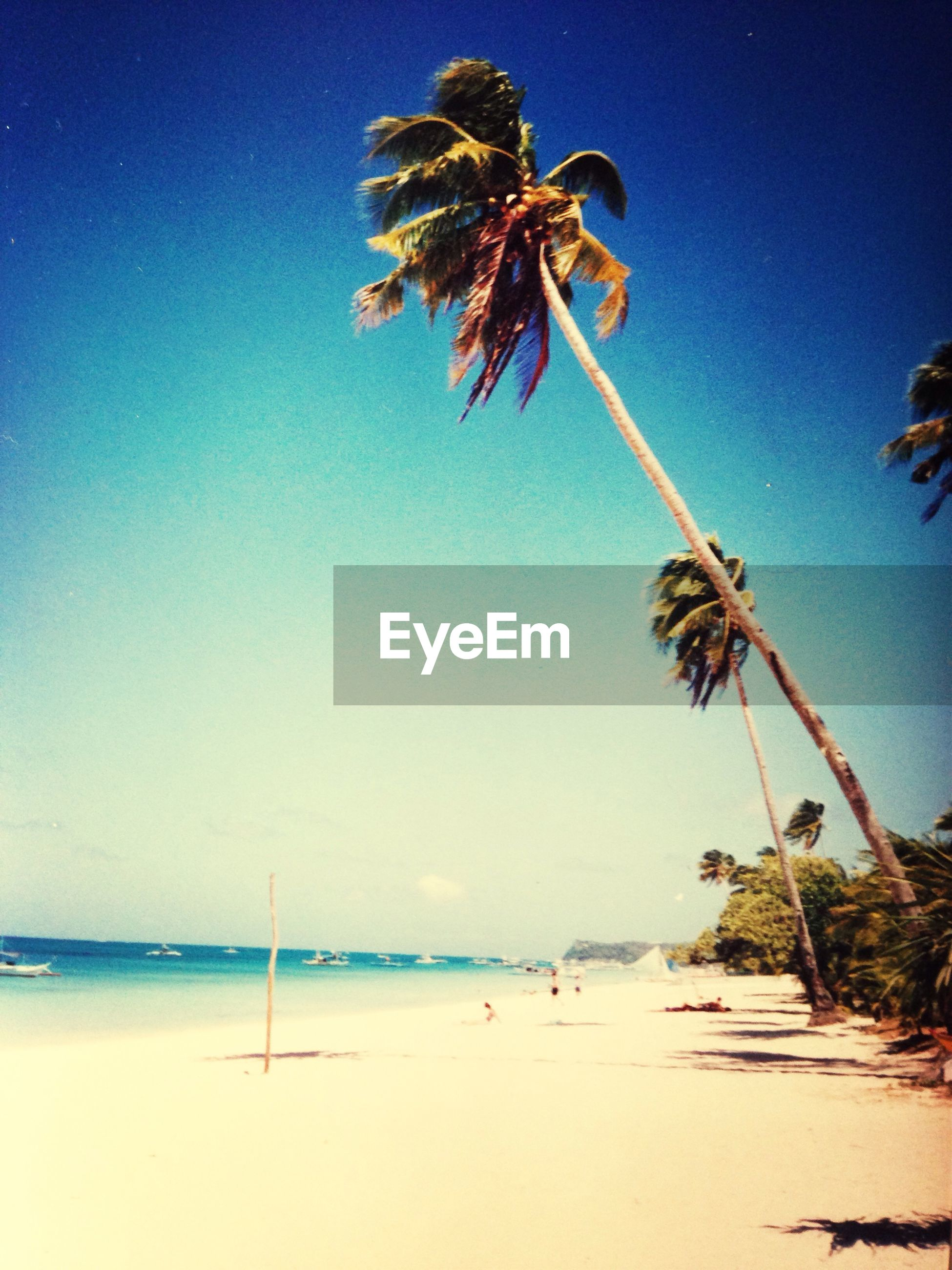 palm tree, sea, beach, clear sky, blue, tranquility, horizon over water, water, shore, tree, tranquil scene, sand, beauty in nature, nature, scenics, sky, low angle view, tree trunk, growth, sunlight