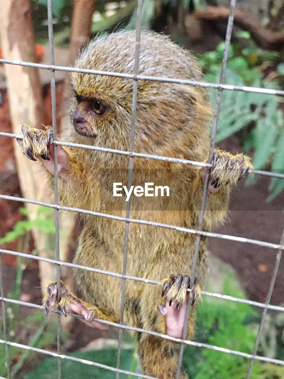 animal themes, mammal, one animal, focus on foreground, no people, day, animals in the wild, outdoors, monkey, trapped, close-up, nature