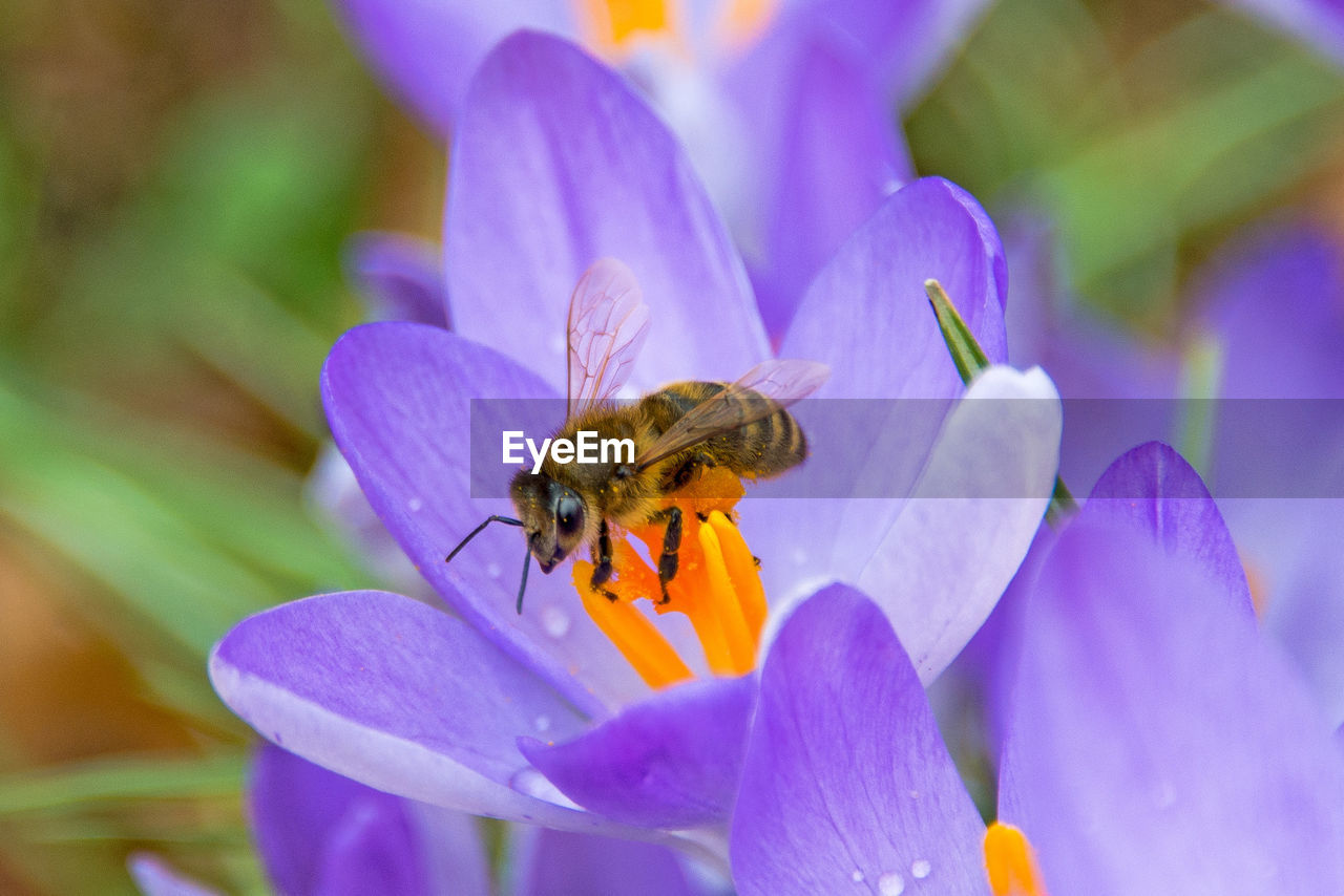 flower, one animal, petal, insect, animal themes, nature, purple, animals in the wild, beauty in nature, fragility, growth, freshness, no people, plant, close-up, outdoors, flower head, day, pollination, animal wildlife, bee