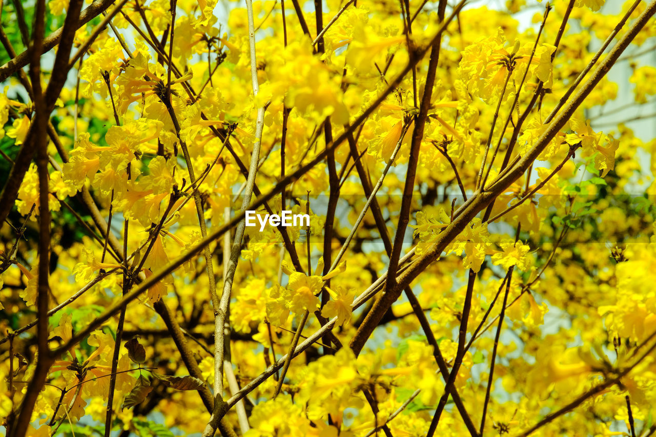 CLOSE-UP OF YELLOW FLOWERING PLANTS AGAINST TREE