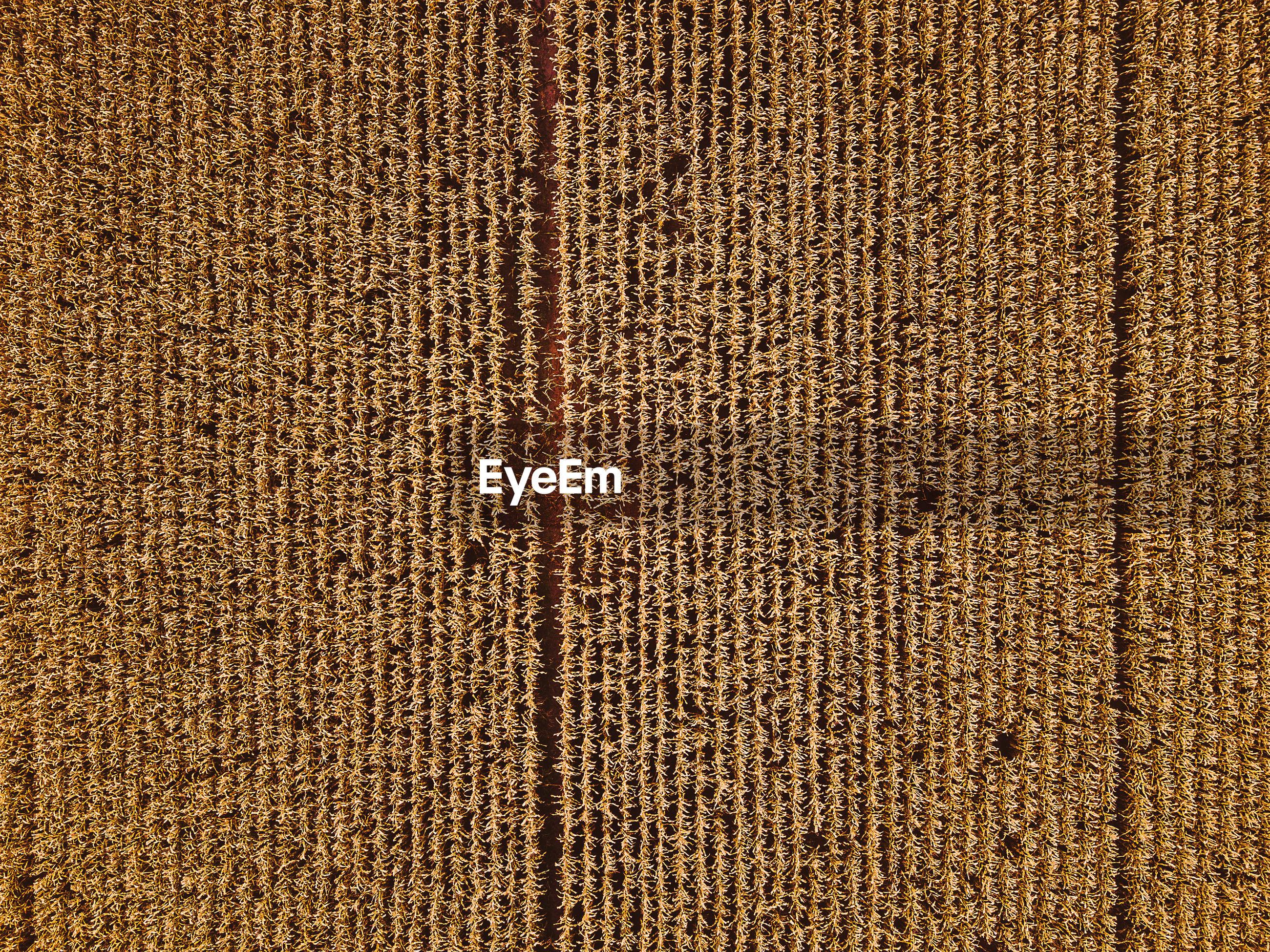 Full frame shot of textured carpet