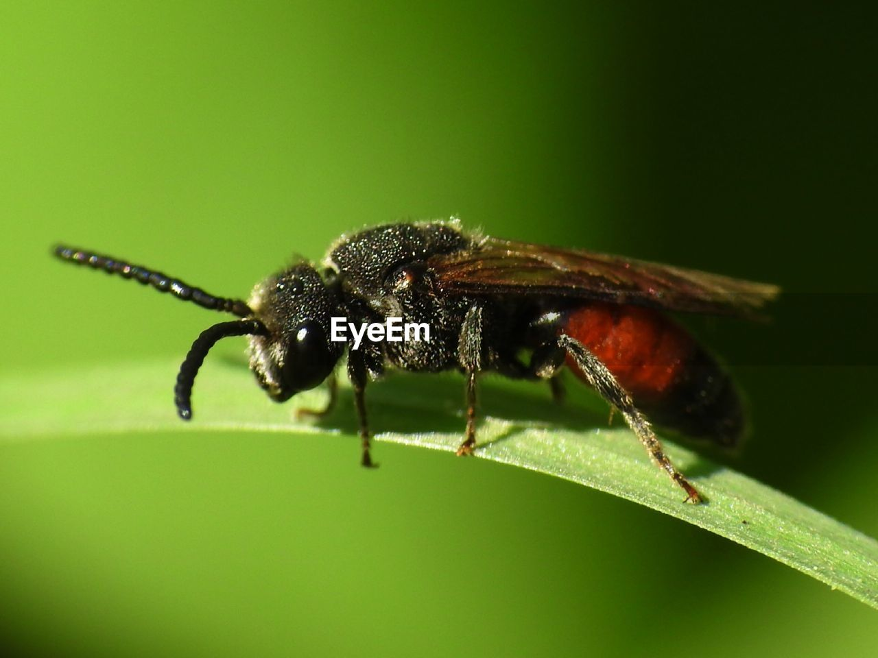 invertebrate, insect, animal, animal themes, animal wildlife, one animal, animals in the wild, close-up, plant part, leaf, green color, nature, no people, animal body part, zoology, focus on foreground, animal wing, day, plant, selective focus, outdoors